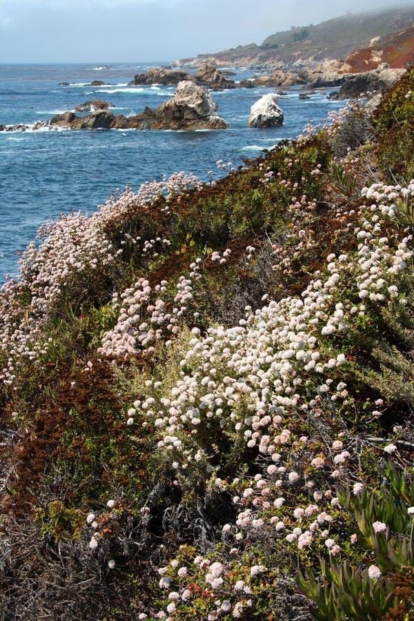 Download Big Sur stock image. Image of scenic, ocean, landscape - 14148751