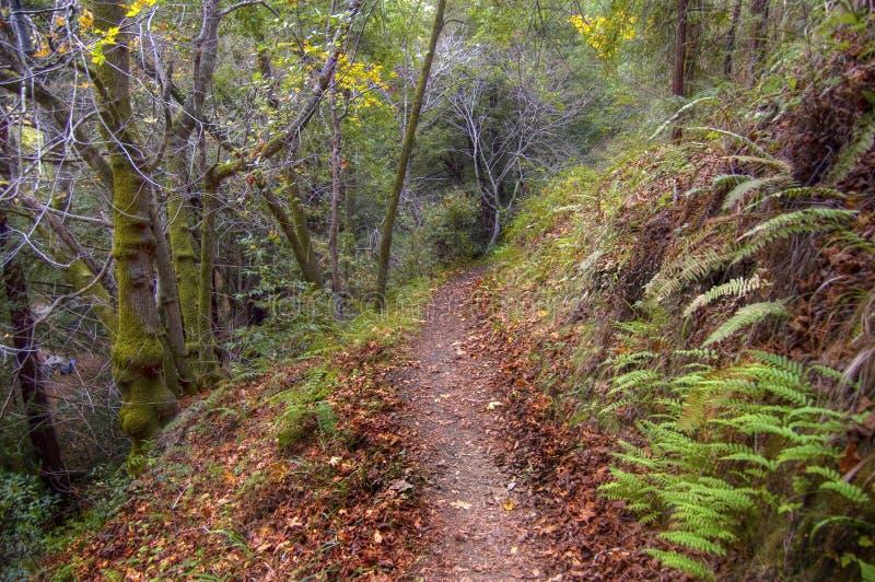 Download Big Sur stock photo. Image of brown, trees, november - 15701980