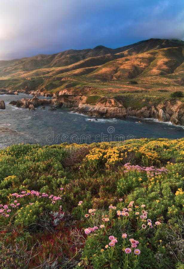 Big Sur Bloom. Big Sur is a rugged stretch of the California central coast between Carmel and San Simeon stock photos