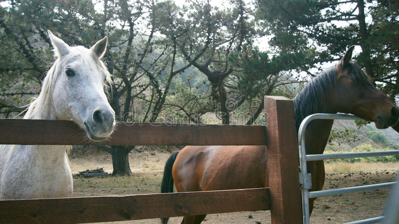 BIG SUR, CALIFORNIA, UNITED STATES - OCT 7, 2014: A horse ranch in CA, USA with horses standing along fence Highway No 1. BIG SUR, CALIFORNIA, UNITED STATES royalty free stock photo