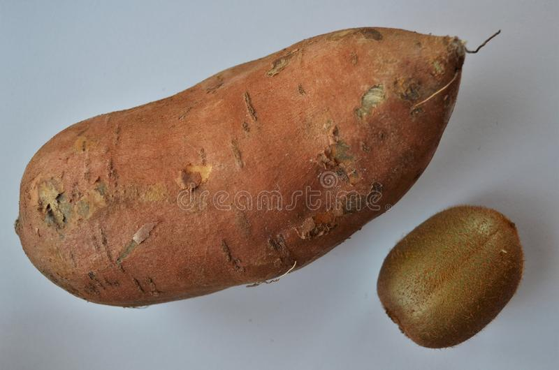 Big sweet potato in comparison with a small kiwi royalty free stock image