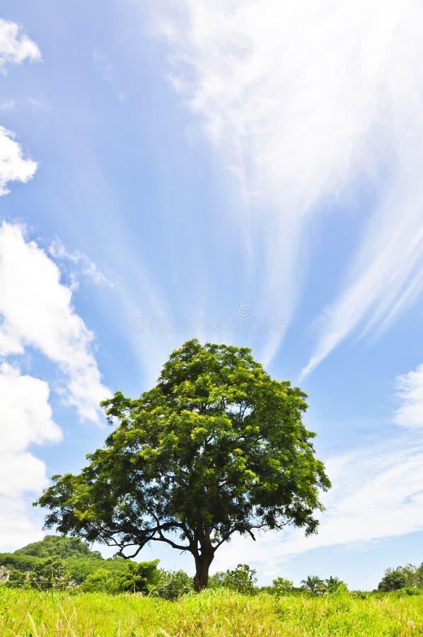 Download Big tree stock image. Image of light, natural, grass - 25297503