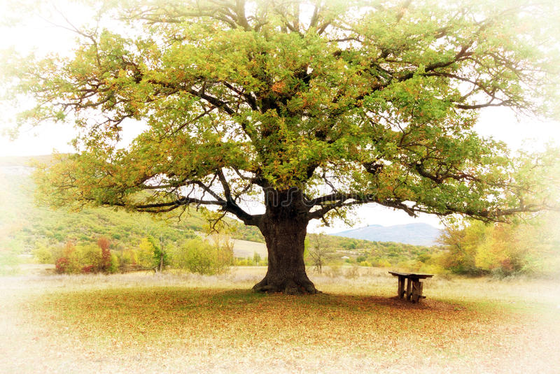 Big tree. Composition of nature stock photos