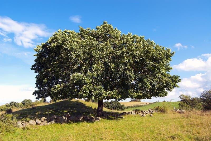 Download Big tree stock image. Image of grass, plant, beautiful - 27307241