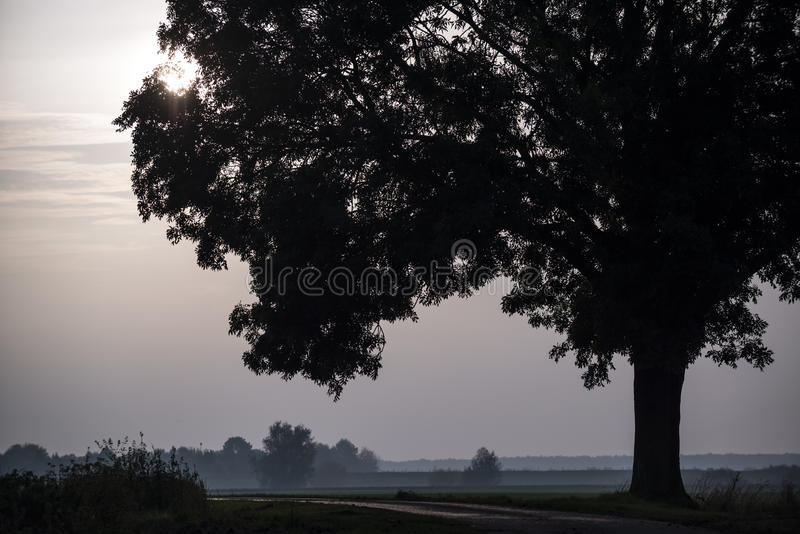 Big Tree Royalty Free Stock Image