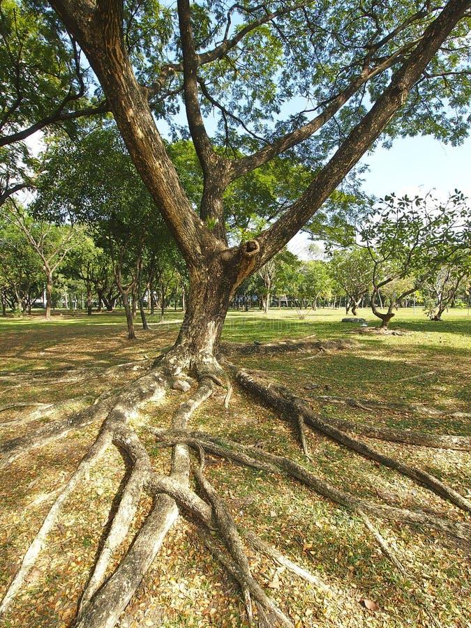 Free Big Tree Stock Photos - 31270343