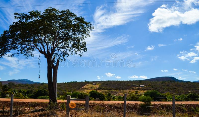 Big tree and a beautiful blue sky with clouds and mountain in nordeste. Big tree and a beautiful blue sky with clouds in and mountain in nordeste. there are a royalty free stock images