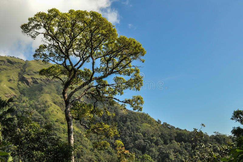 Big tree and blue sky stock image