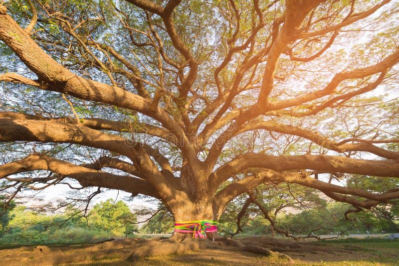 Big tree branch bottom view royalty free stock image