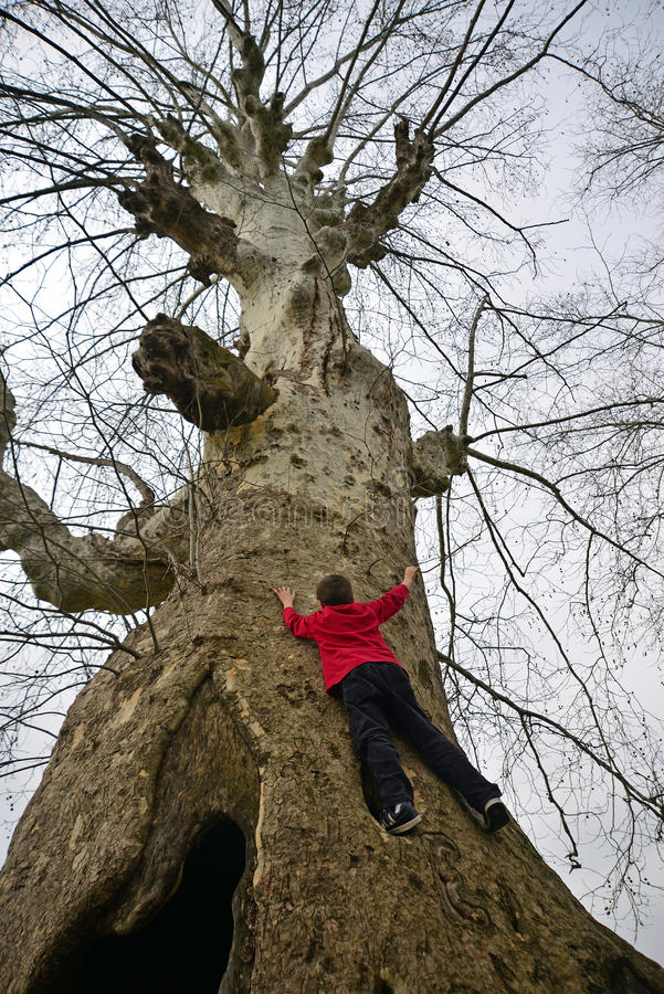 A big tree climbing child stock photography