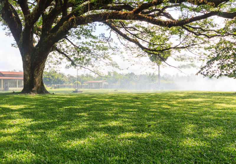 Big tree. In country of Myanmar stock photography