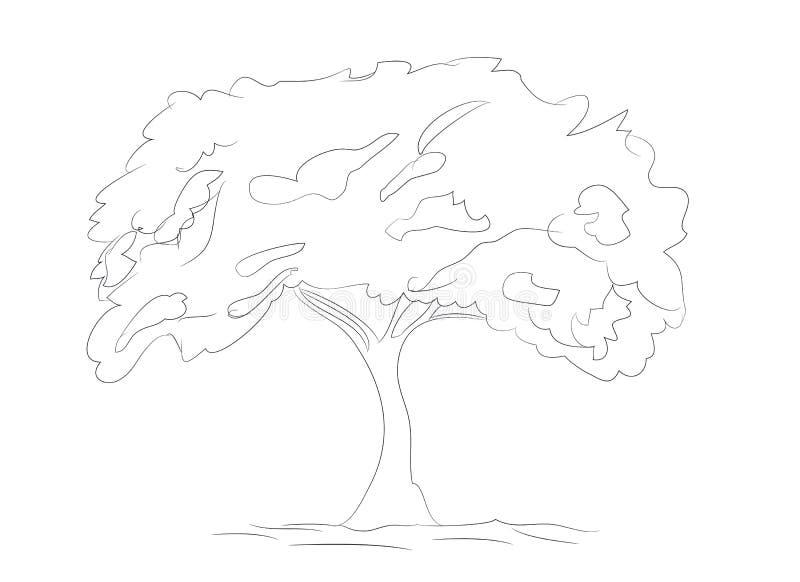 Big tree drawing lines, vector vector illustration