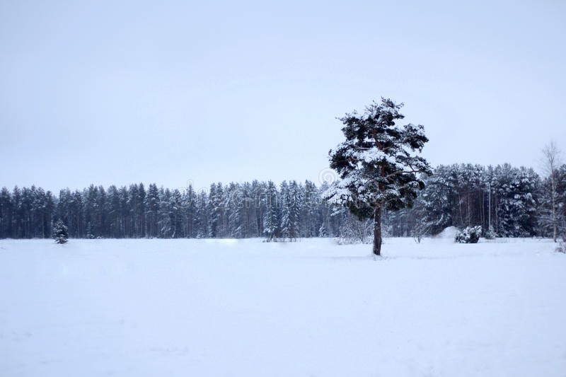 Big tree on a field stock photography