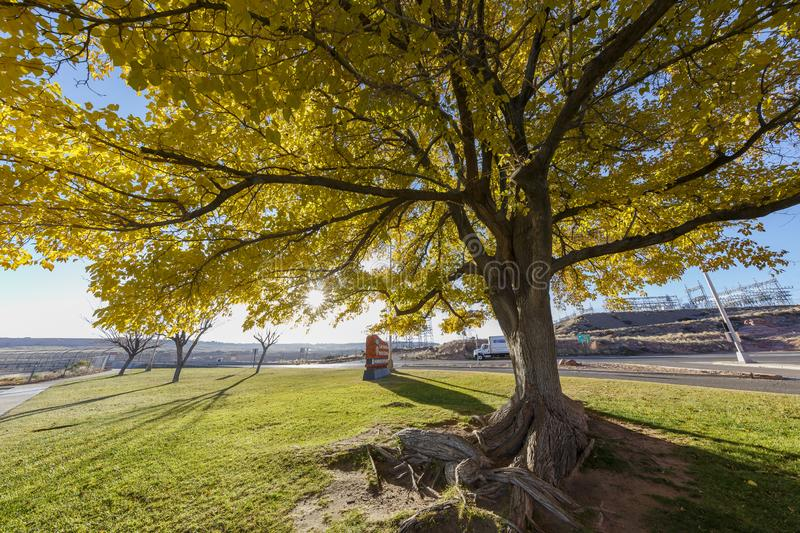 Big tree in front of the Carl Hayden Visitor Center sign. Page, NOV 27: Big tree in front of the Carl Hayden Visitor Center sign on NOV 27, 2015 at Page, Arizona royalty free stock photos