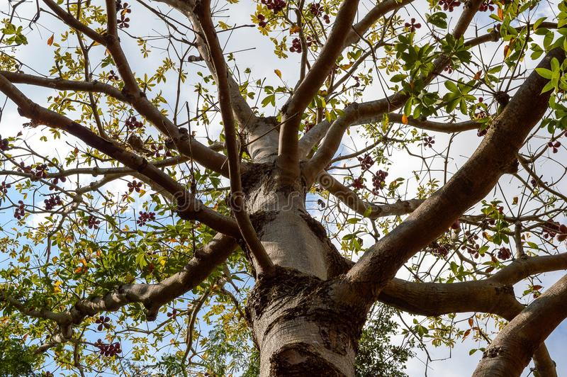 Big tree in garden. Close up big tree in garden royalty free stock photo