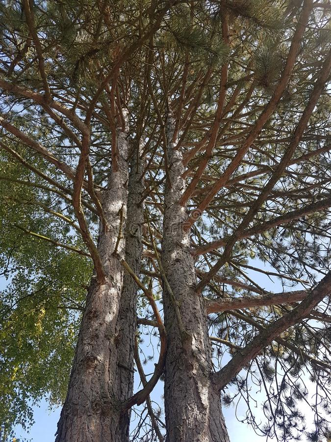 Big Tree in the garden at Heusenstamm in Germany. Big Tree in nature royalty free stock photo