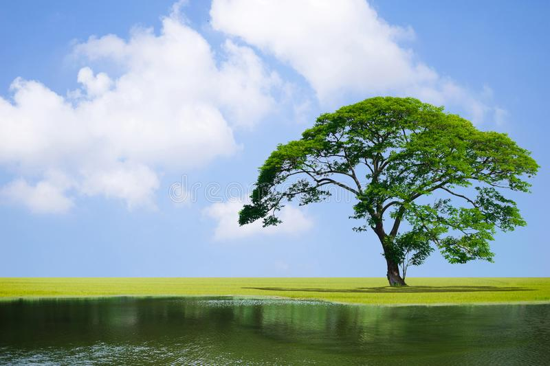 Big tree in the garden and river pond the sky good. Big tree in the garden and river pond the sky a good environment stock photography