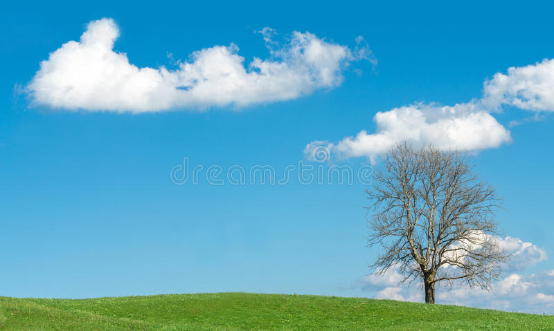 Big tree on green hill, blue sky and white clouds royalty free stock photography
