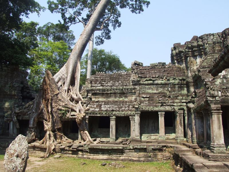 The big tree growing over the Preah Khan temple. The famous big tree growing over the walls of Preah Khan, Siem Reap, Cambodia royalty free stock image