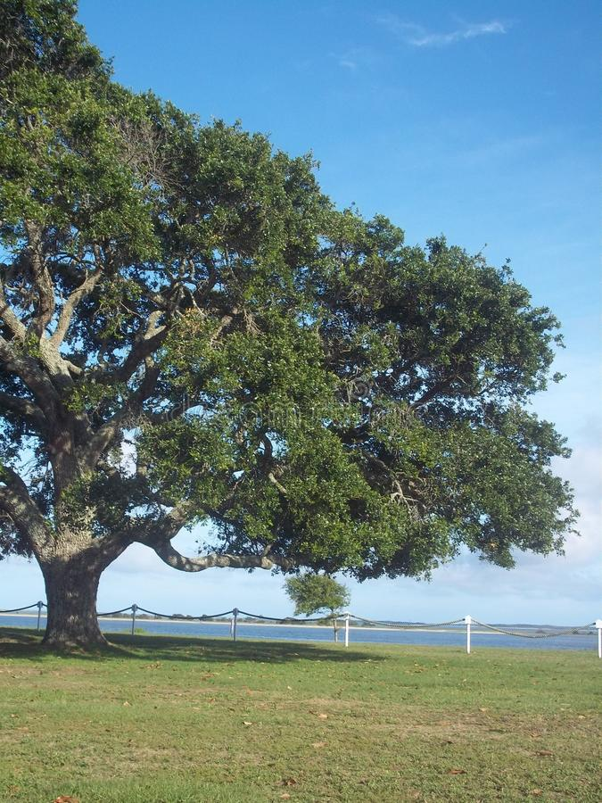 Big tree by the harbor stock photography