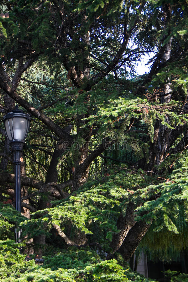 Big tree and light pole. In daylight stock photos