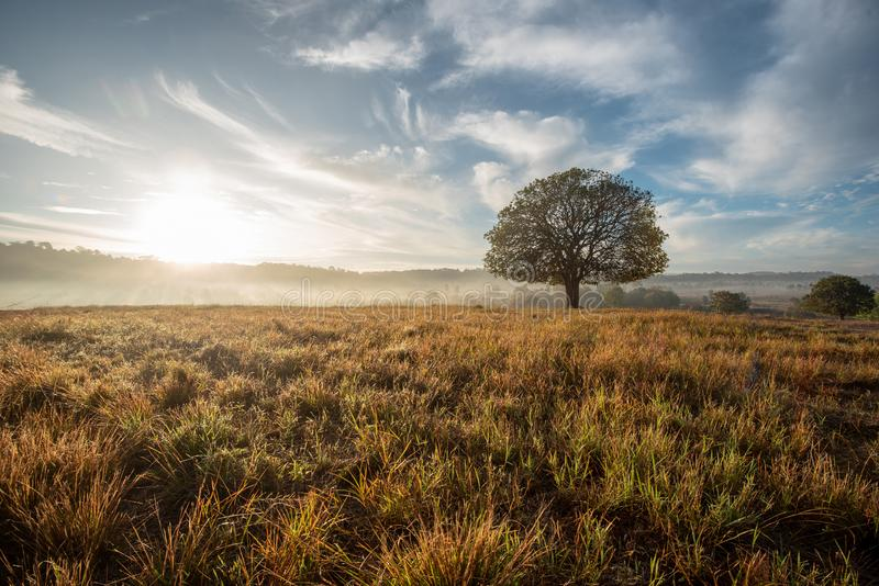 Big tree in the meadow morning light beautiful stock photography