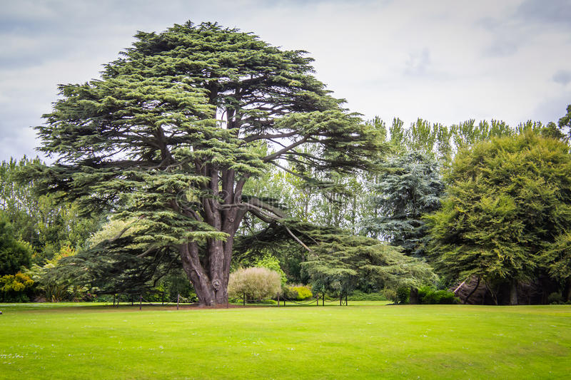 Big Tree. Outdoor shot of a big tree in a field in Ireland stock photography