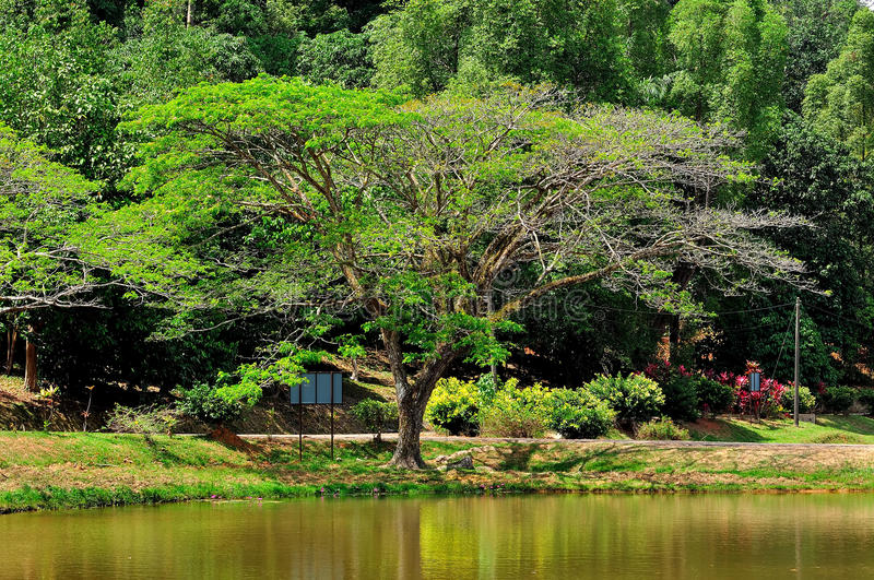 Download Big tree in the park stock photo. Image of grass, rest - 39509852