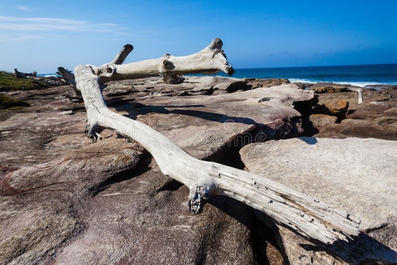 Big Tree Rocks Ocean