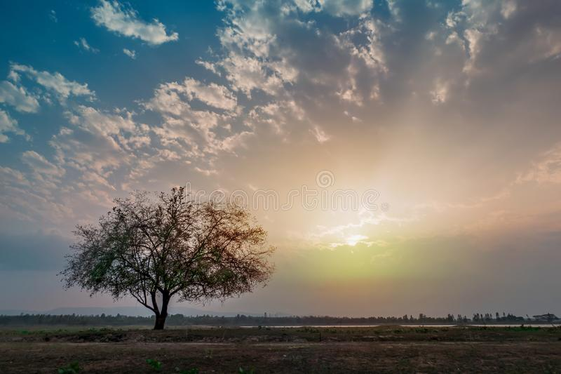 Big tree and sky. Beautiful scence of big tree with leaves at sunset sky with clouds stock photography