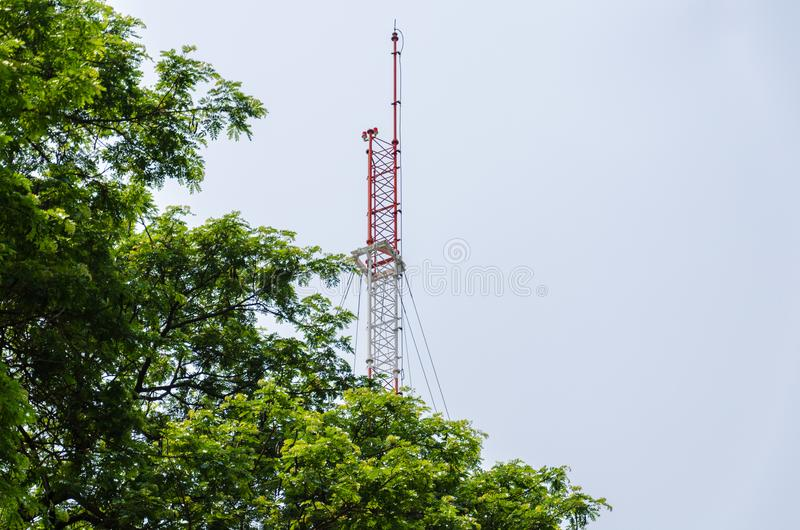 Big tree with the top of the telephone pole. Thailand royalty free stock photo