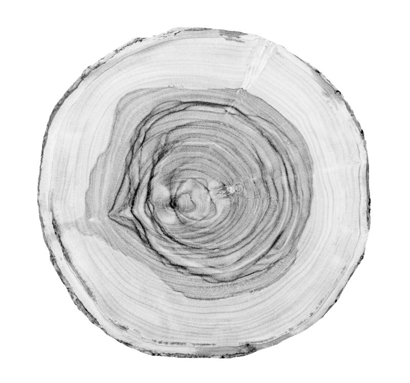 Big tree trunk slice cut from the woods. Textured surface with rings and cracks. Neutral brown background made of hardwood. royalty free stock images