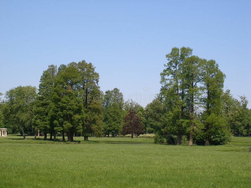 Download Big trees & blue sky stock photo. Image of landscape, flora - 2714600