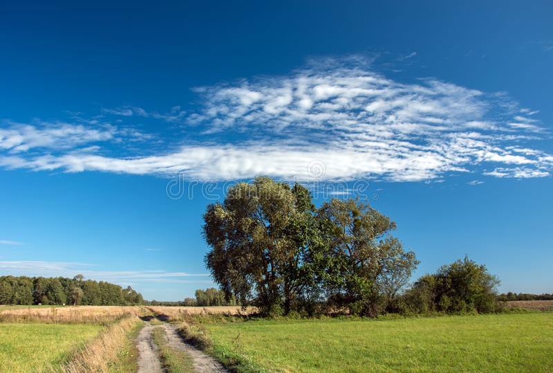 Big trees growing along country road and blue sky royalty free stock photo