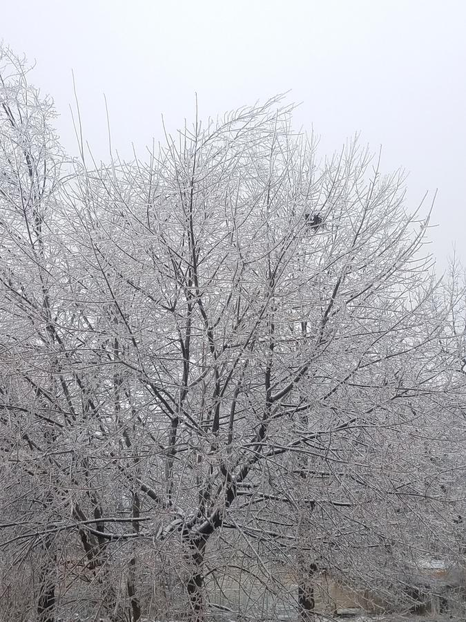 Backyard icy trees in winter royalty free stock image
