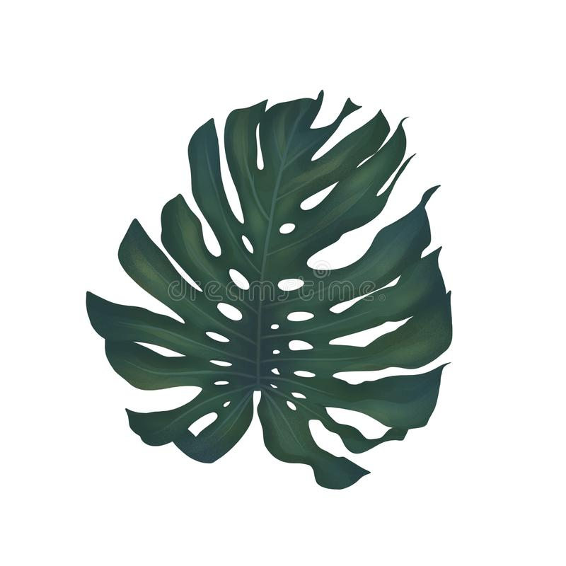 Big tropical leaf of monstera royalty free illustration