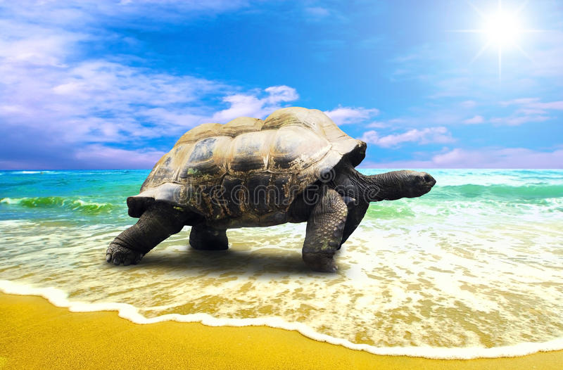 Big Turtle. On the tropical oceans beach