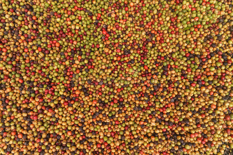 Big variaty of coffee beans. From green to rotten royalty free stock image
