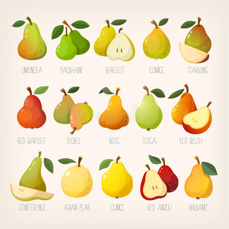 Big variety of pears with names. Isolated vector images. Big variety of pears with names and slices. Isolated vector images royalty free illustration