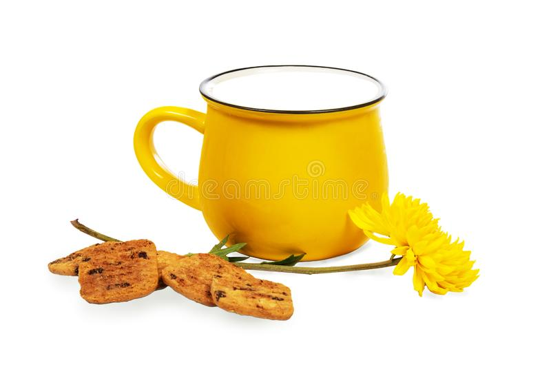 Big vivid yellow cup of milk, cookies and beautiful chrysanthemum flower isolated on white background royalty free stock photography