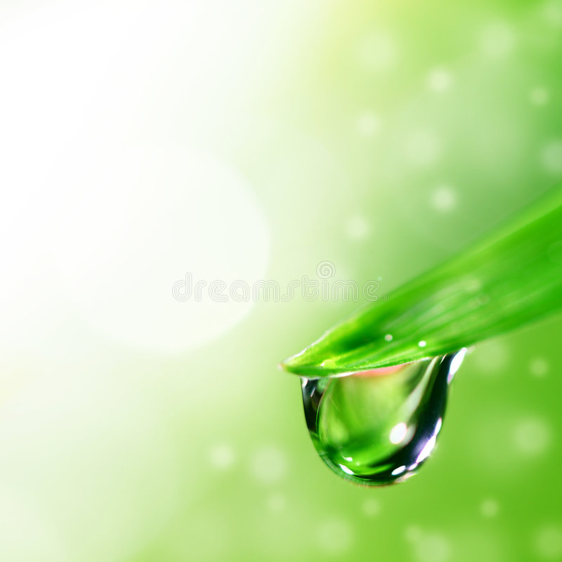 Big water drop. On grass blade royalty free stock photography