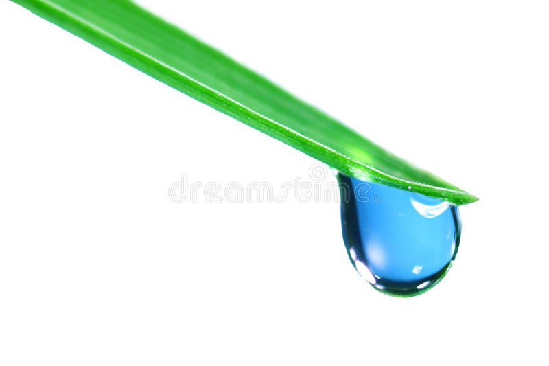Big water drop isolated. Big water drop on grass blade isolated stock photos