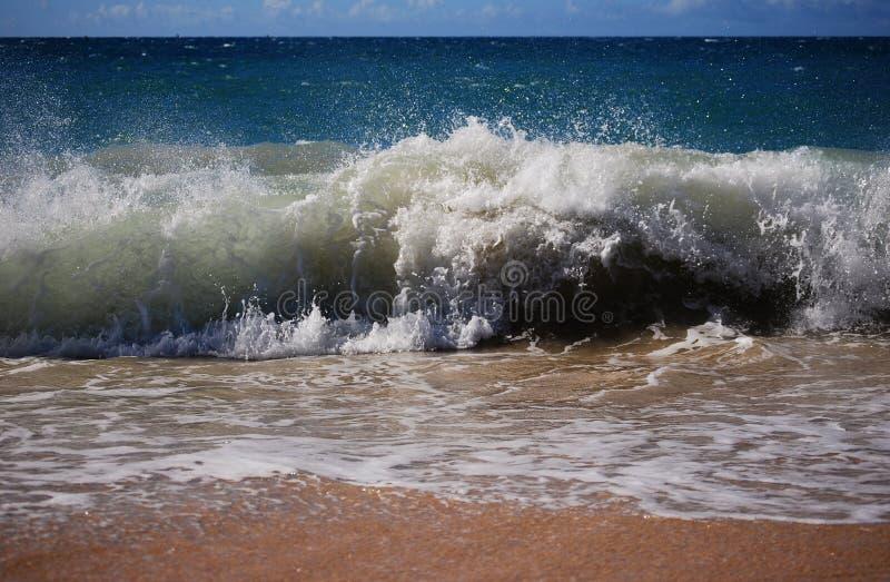 Big Wave royalty free stock photo