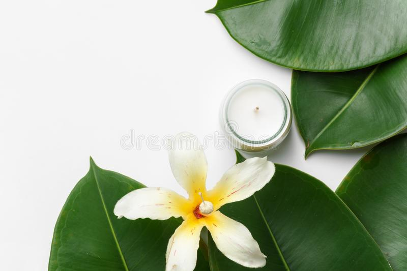 Big wet ficus leaves tropical flower candle on white background. Organic cosmetics wellness spa body care concept. High resolution banner poster mock up. Copy royalty free stock photo