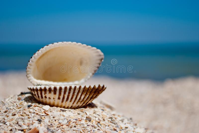 Big white beautiful open shell on the left on a background of blue sea sand summer sunny day royalty free stock images