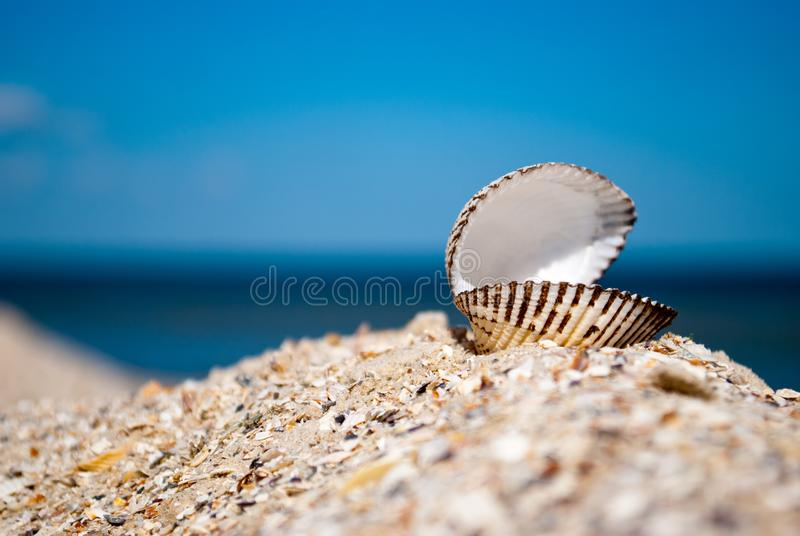 Big white beautiful open shell on the right on a background of blue sea sand summer sunny day royalty free stock image