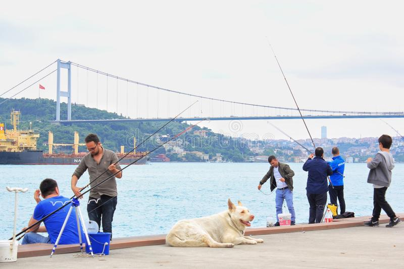 Big white dog on embankment with fishermen and Istanbul Bosphorus bridge background royalty free stock photography