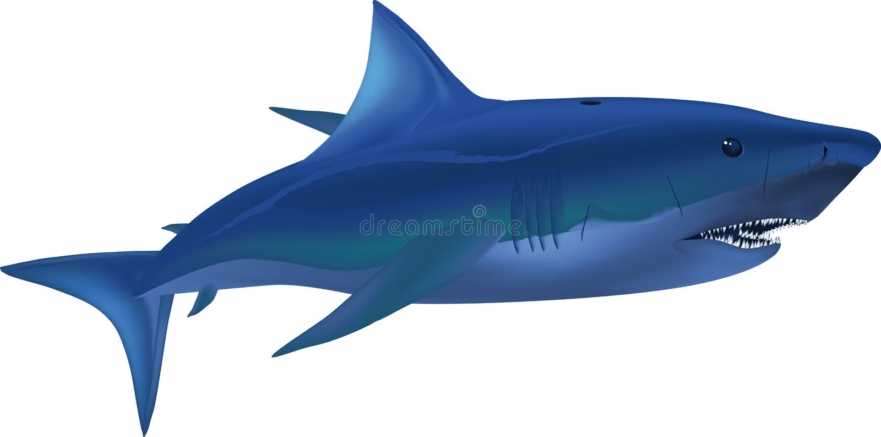 Big White Shark Stock Image