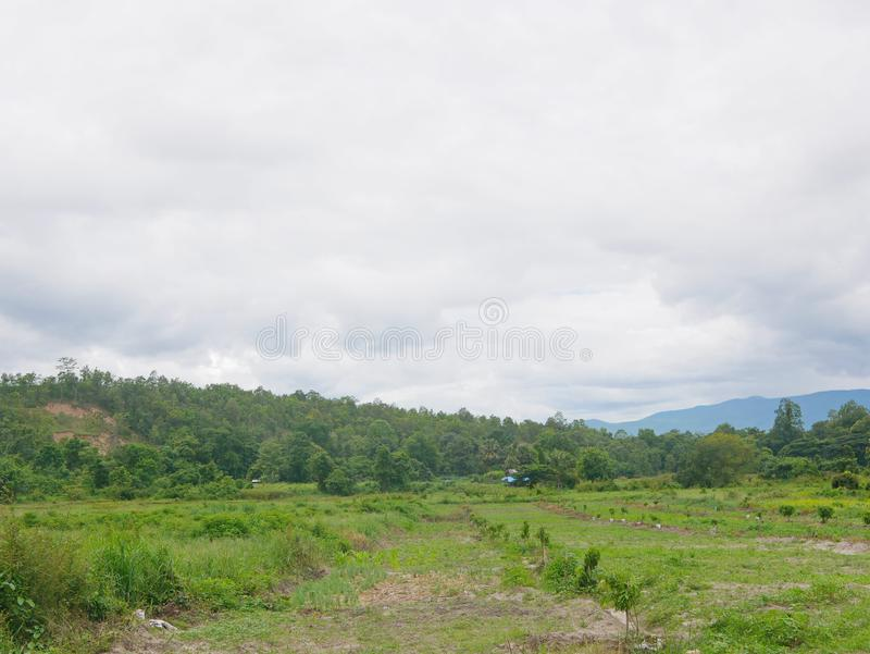 Big wide open field, with view of hills and cloudy sky, for agriculture in the North of Thailand.  royalty free stock photography