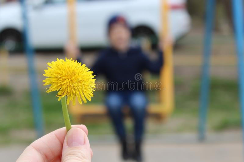 Big yellow dandelion close-up on the background of swinging on the swing boy.  royalty free stock photos